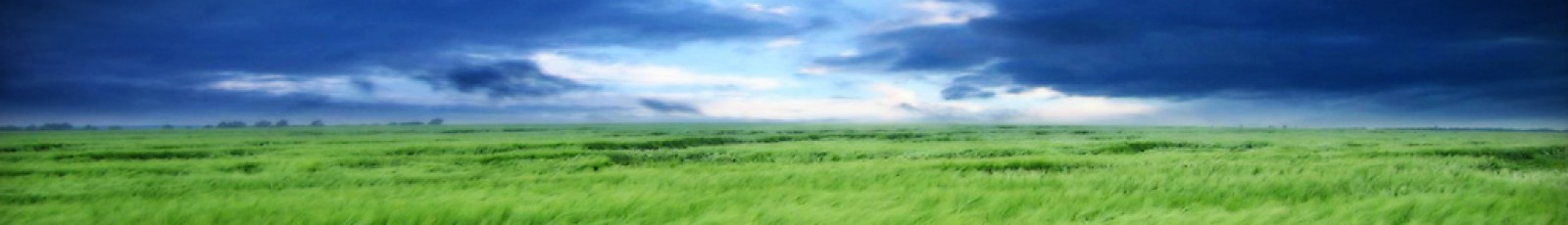 cropped-clouds-and-grass-header.jpg